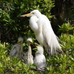 Birding tours on Daufuskie Island