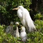 Birding tours on Daufuskie Island