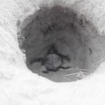 baby loggerhead turtle hatching daufuskie island