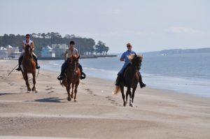 haig equestrian